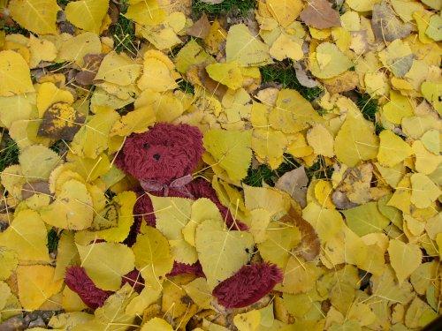 Aloysius есен