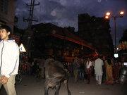 Хората на фестивала и крава